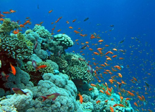 red-sea-underwater-640x463.jpg